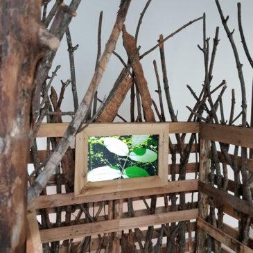 Andrea Torrice's Video Installation at Contemporary Art Center in Cincinnati